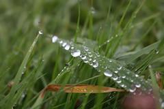 IMG_1213 (bia93snow) Tags: rain raindrop