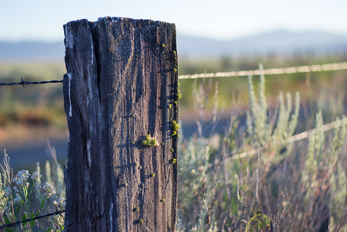 Sunset Fencepost