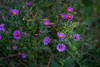 busy bee (severalsnakes) Tags: kansas pentax rokinon8514 saraspaedy shawnee shawneemissionpark k1 manualfocus