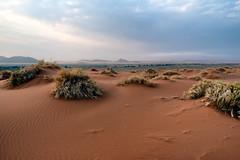 Namib Desert (Guy Goetzinger) Tags: natur wüste desert sand dry namibia nikon goetzinger africa hot sky panorama safari sossusvlei afrique namibie travel voyage park 2018