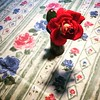 red rose (Bim Bom) Tags: rose flower berus