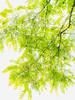 Flicker.jpg (Klaus Ressmann) Tags: klaus ressmann omd em1 fburie leaves nature summer branches design flcnat softtones tree klausressmann omdem1