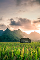 Early morning (=Heo Ngốc=) Tags: sky season summer sun sunbeam scenic scene peaceful ray red romantic sunlight sunny vivid wallpaper weather yellow view twilight sunrise sunset texture travel outdoors orange color cloudy colorful continuous dawn cloudscape cloud beautiful beauty blue bright dramatic dusk morning mountains nature night light landscape evening faintlyvisible gold heaven background vietnam rice field vegetation nobody