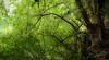 Reflejos (Rafa perena) Tags: laguna reflejos agua arboles colores nature naturaleza landscapes scenery azores islas luz 1835 sigma 18 nikon d7100 parques paraisos rutas sendereismo saomiguel