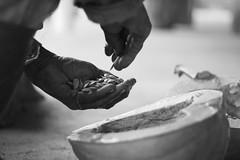 Vivência em Agrofloresta - Ibicoara (djessicasueli) Tags: mão abóbora monocromático