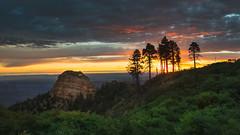 Canyon Sunrise (David Colombo Photography) Tags: grandcanyon northrim sunrise vibrant landscape color trees canyon rock mountain sky clouds yellow red magenta green blue storm monsoon nikon d800 davidcolombo davidcolombophotography