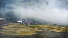Lao chải - sapa (Vampire Photo) Tags: làocai sapa laochải travel lúachín