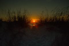 8F9A5319 (ericvdb) Tags: sunset dunes fb lakemichigan dunegrass