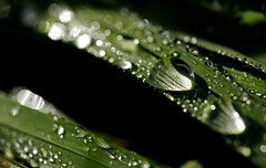 To capture the rain (smcnally24601) Tags: macro summer england epsom downs english britain british field morning surrey