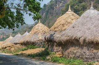 mae fah luang - thailande 47