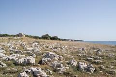 Chorwacja - Lun (WMLR) Tags: hd pentaxd fa 2470mm f28ed sdm wr pentax k1 chorwacja croatia pag lun