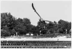 youth (i.v.a.n.k.a) Tags: ivanadorn ivanahesova sonyalpha birds gull young sea ocean germany rügen seabird moment blackandwhite