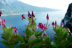Lake Garda (nelesch14) Tags: flowers summer view mountains vacation evening light blue macro high background nature pieve italy