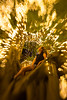 Dreamer (jsnowy2768) Tags: brisbane city goodwillbridge qut fig moretonbayfig tree fairylights lights bokeh lensbaby queensland portrait sweet35 composerpro selectivefocus wideopen christmaslights