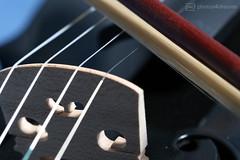 bow / string connection for macro mondays (photos4dreams) Tags: connectionp4d connection verbindung macromondays macro makro photos4dreams p4d photos4dreamz hmm geige violin bow string bogen saite canoneos5dmark3