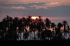 Sunset Palms (mhawkins) Tags: bigisland hawaii sunset palm palmtrees keawaikibay
