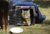 IMG_2498 (kz1000ps) Tags: boston massachusetts bostoncommon common park cats kitties kittens felines caturday purr catcafe brighton humane society adoptions