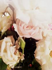 Rose flower, роза (Anna Gelashvili) Tags: roseflower цветокроза rose flower flowers цветочки garden