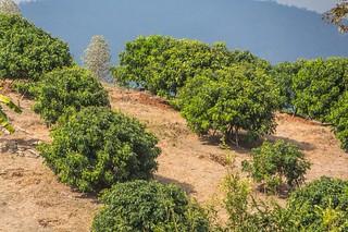 trekking chiang mai - thailande 51