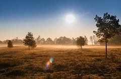 Misty morning on Rügen / mellnitz (drummerwinger) Tags: rot rügen nebel sonnenaufgang tau dunst canon700d sigam sonne morgentau wiese stimmung