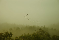 Misty morning (stefan.pavic1) Tags: forest birds tree trees morning fog nikon outside serbia