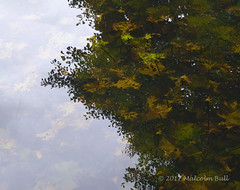 Lily Pond (Malcolm Bull) Tags: 20170811woodsmill0006edited1web include woods mill pond reflection water lily