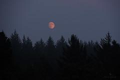 Oregon moon (Claudia Künkel) Tags: oregon fullmoon forest evening fog smokey coast