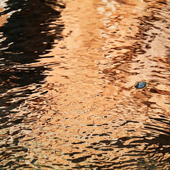 In a Stream of Copper (studioferullo) Tags: abstract art beauty bright colorful colourful colors colours contrast dark detail edge light metal minimalism natural outdoor outside perspective pattern pretty scene serene tranquil study sunlight sunshine texture tone world sedona arizona stream river reflection stone rock flow copper orange trail glow liquid water