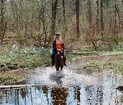 splashing on through (losthalo) Tags: splashy riding horses equines buddy pentaxart itsnotacapture smcpm100mmf28 fuji superia k1000