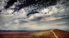 Desierto, flores y nubes. (josemcalvol) Tags: atacamadessert chile flowers desiertoflorido nubes clouds floweringdessert magenta red sky cielos road hill cerro