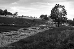samotnia / seclusion (MichalKondrat) Tags: natura masywśnieżnika niebo pejzaż czarnobiałe krajobraz drzewa blackwhite polska 2017 bw sierpień kotlinakłodzka sudety przyroda dolnośląskie zieleń góry chmury