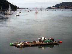Cormorants (the justified sinner) Tags: justifiedsinner cormorants shag barge bay sea wales north conwy panasonic gh2 gx7 minolta macro rokkor md 50 35