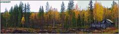 Ferme abandonnée de Finlande en automne - Laponie (jamesreed68) Tags: finlande kisosvaarantie ostrobotnie laponie paysage nature forêt abandonnée cabane ruine kodak easyshare c183