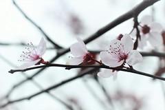 IMG_0308 (nelson_tamayo59) Tags: flores blancas parque tenerife la laguna españa canarias naturaleza