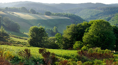 June Evening (davidpemberton78) Tags: landscape evening june slopes wooded greenery