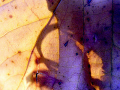 Shadows of Life (AleksandraMicic) Tags: flickr nature macro details 7dwf