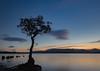 Blue hour at Milarrochy (robdonnelly) Tags: lochlomond milarrochybay milarrochy lake loch bluehour sunset calm still longexposure scotland peaceful tranquil evening lochlomondandthetrossachsnationalpark