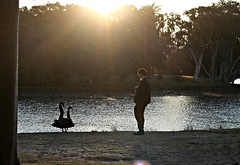 2017 Sydney: A Very Windy Spring Afternoon in Centennial Park #66 (dominotic) Tags: sydney nsw australia newsouthwales 2017 centennialpark publicpark tree green bluesky goldenglow pond water birds blackswan blue shadow people sunflare nature springsunset