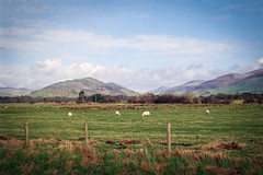 Life in Rural Wales (Howie Mudge LRPS BPE1*) Tags: landscape nature ngc nationalgeographic film photo photograph photography photographer sky clouds hills mountains fence grass bracken animals sheep outside outdoors travel travelling traveller tywyn gwynedd wales cymru uk 35mm 35mmfilmphotography analog anlogue analogphotography agfa vista agfavistaasa200film olympus om2n olympusom2ncamera zuiko50mmf18lens rural scene scenery scenic ishootfilm filmisntdead bright sunny day