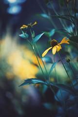 trying to catch the last summer sunlight (christian mu) Tags: flowers bokeh nature münster germany muenster summer botanicalgarden botanischergarten christianmu sonya7ii sony planar planar5014 50mm 5014 zeiss