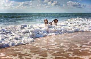 Sun Sea & Spaniels