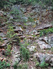 Thunderhead Sandstone (Neoproterozoic; Meigs Falls roadcut, Great Smoky Mountains, Tennessee, USA) 2 (James St. John) Tags: thunderhead sandstone precambrian proterozoic neoproterozoic great smoky mountains national park tennessee