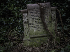 In the Grip of Ivy - Abney Park Cemetery May 2017 (GOR44Photographic@Gmail.com) Tags: abneypark cemetery gravestone ivy london gor44 omdem5 45150mmf456 green