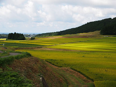 From a break in the clouds (murozo) Tags: rice field cloud sky light nikaho akita japan 田圃 稲 雲 空 光 にかほ 秋田 日本