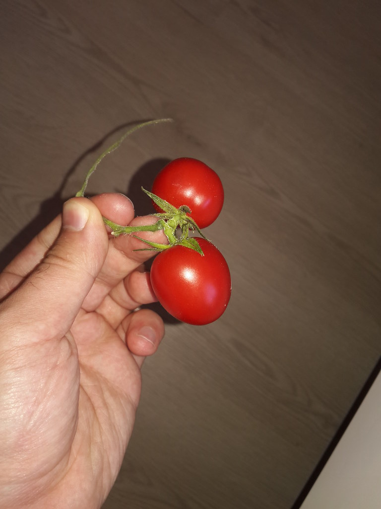The World\'s Best Photos of tomato and turkey - Flickr Hive Mind