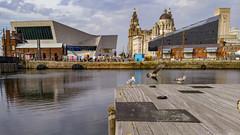 three little birds (EURadT) Tags: liverpool canningdock seashore birds port urban outdoors