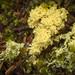 Dog Vomit Slime Mold (roe.nate) Tags: fuligoseptica dogvomit forest fungi macro macrophotography nature naturephotography oregon pacificnorthwest pnw slimemold vomit reedsport unitedstates us