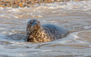 JWL7821  Common Seal..