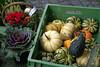 Melsungen, Marktplatz, Wochenmarkt (HEN-Magonza) Tags: melsungen hessen hesse deutschland germany marktplatz market kürbis pumpkin zierkohl ornamentalcabbage wochenmarkt weeklymarket farmersmarket