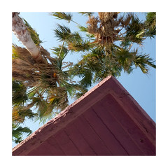 (giovdim) Tags: greece giovis diagonal summer sunlight festive estival postcard triangle palm trees palmiers roof magenta thesunlightinmyeyes thesummerwindallaround reminder recall